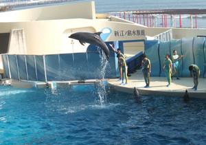 150527enosui_dolphin