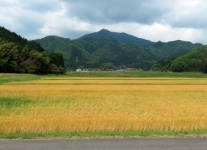 200517around_tsuwano3