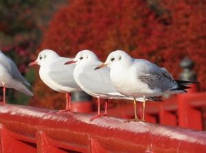 201204yurikamome2_odawara