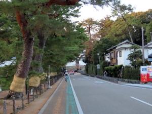 201206hikone_irohamatsu