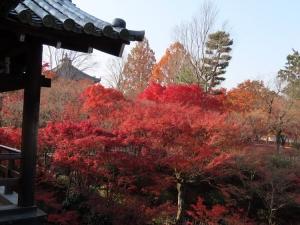 201208toufukuji_momiji2